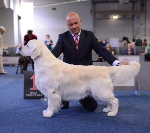 The stunning Multi CH Tramin Arni Joy, our Angelo's maternal grandsire, during World Dog Show, Milan, 2015