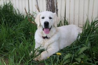 Malibu at seven months...