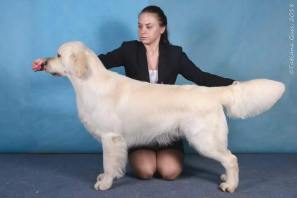 GISELLE'S SIRE GRAND CH OF RUSSIA STARSCREAM DE LAR DE CASANOVA