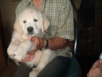 Lola, 8 wks pure sweetness!