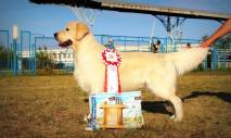 Gabe's sire Multi CH 5x Best of Best of Breed Furor Von Osten Herz, Ukraine